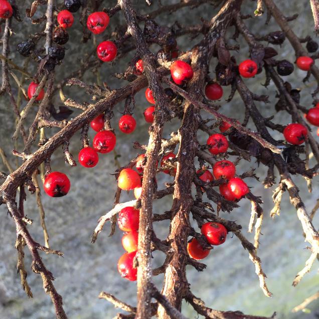 Berries. Don't eat!