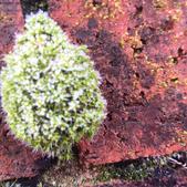 Moss on a garden wall