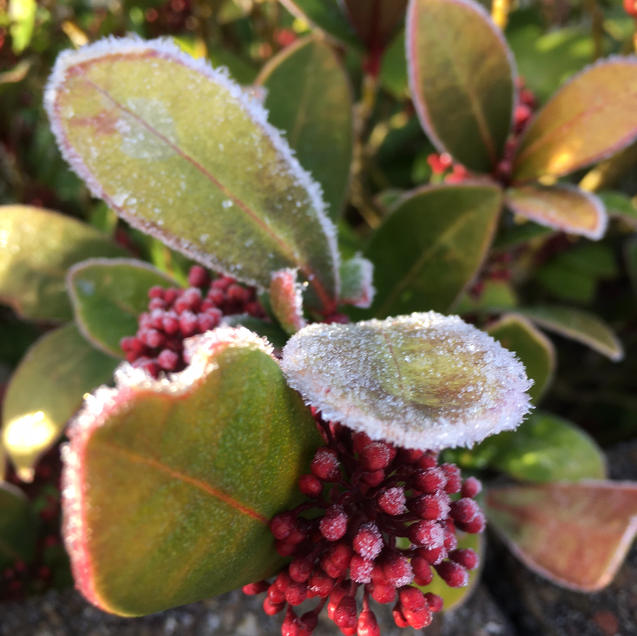 Sparkly berries