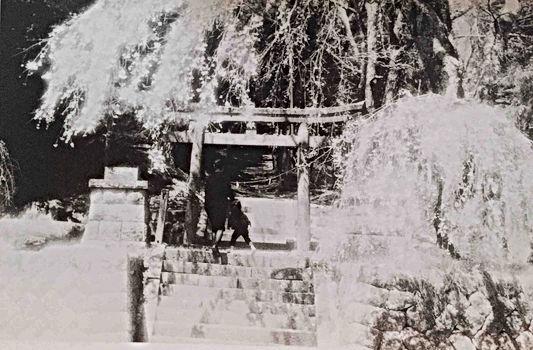 『シビラの四季』の古屋敷での枝垂れ桜と真行寺君枝と弦人の写真