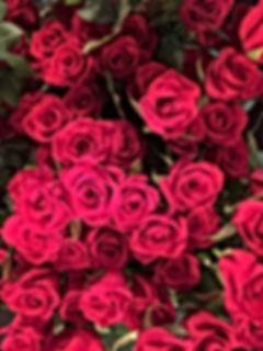 真紅の薔薇の写真