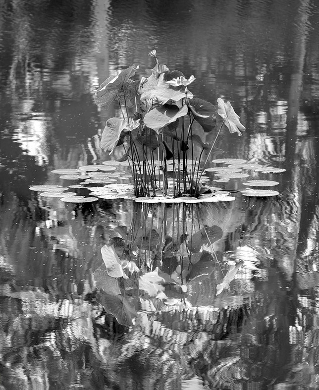 Untitled_Panorama1 (1).jpg