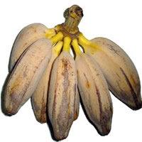 Banana Figo - Kg