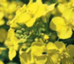 Таран, Инсектицид, Сельхозавиация, Авиахимработы, Авиационно-химические  работы