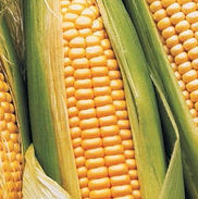 Средства защиты кукурузы