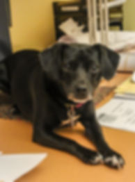 gidgit-desk-doggie.jpg