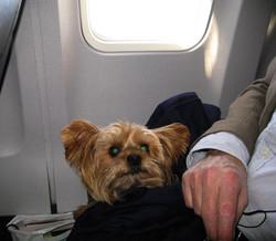 Frequent Flier