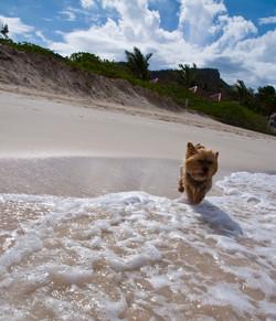 Bartholomew on the Beach