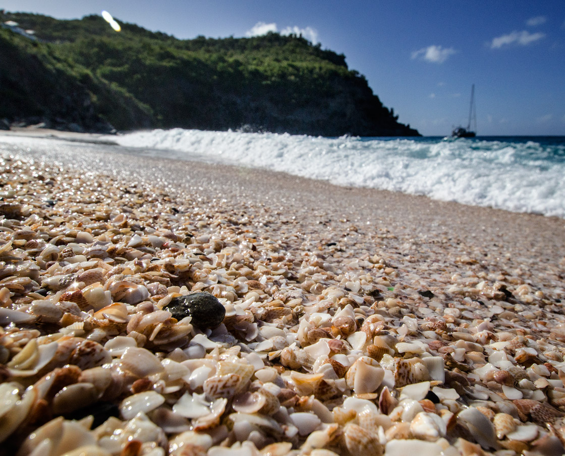 Shell Beach 2016