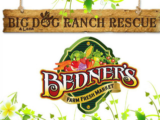 Big Dog Ranch Rescue Adoption Events Weekend of March 25-26