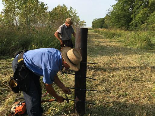 Amish envy, Market offerings, Farm happenings