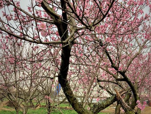 "Insistent signs of spring, ""babies & brunch,"" online market offerings"