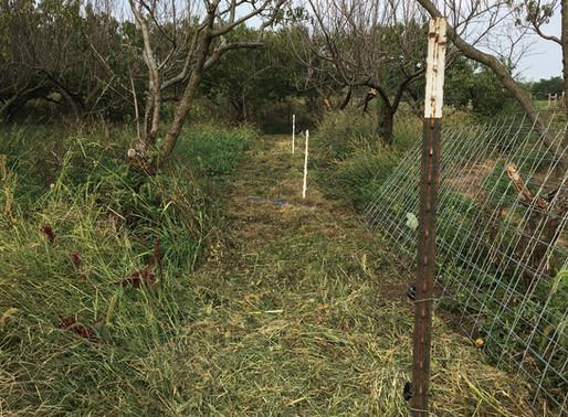 Preparing for breeding, Market Offerings, Farm Happenings