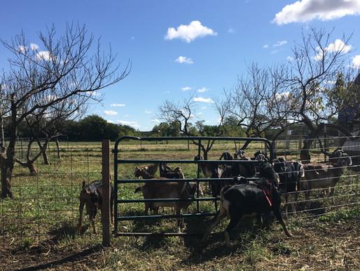 Full moon over fecundity, Market offerings, Farm Happenings