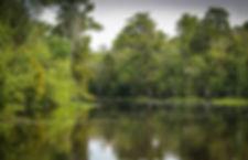 bayou-439881_1920.jpg