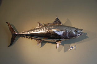 Wall mounted tuna sculpture in stainless steel