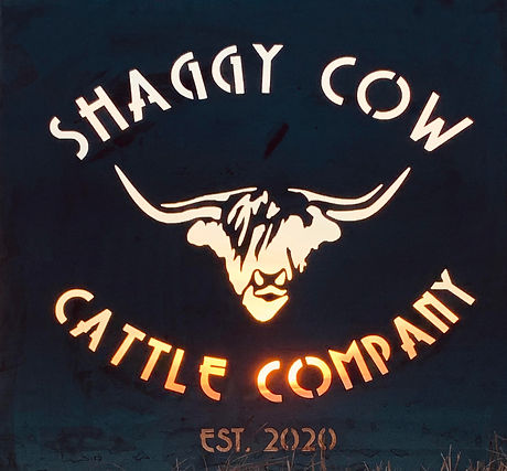 ShaggyCowCattle.jpg