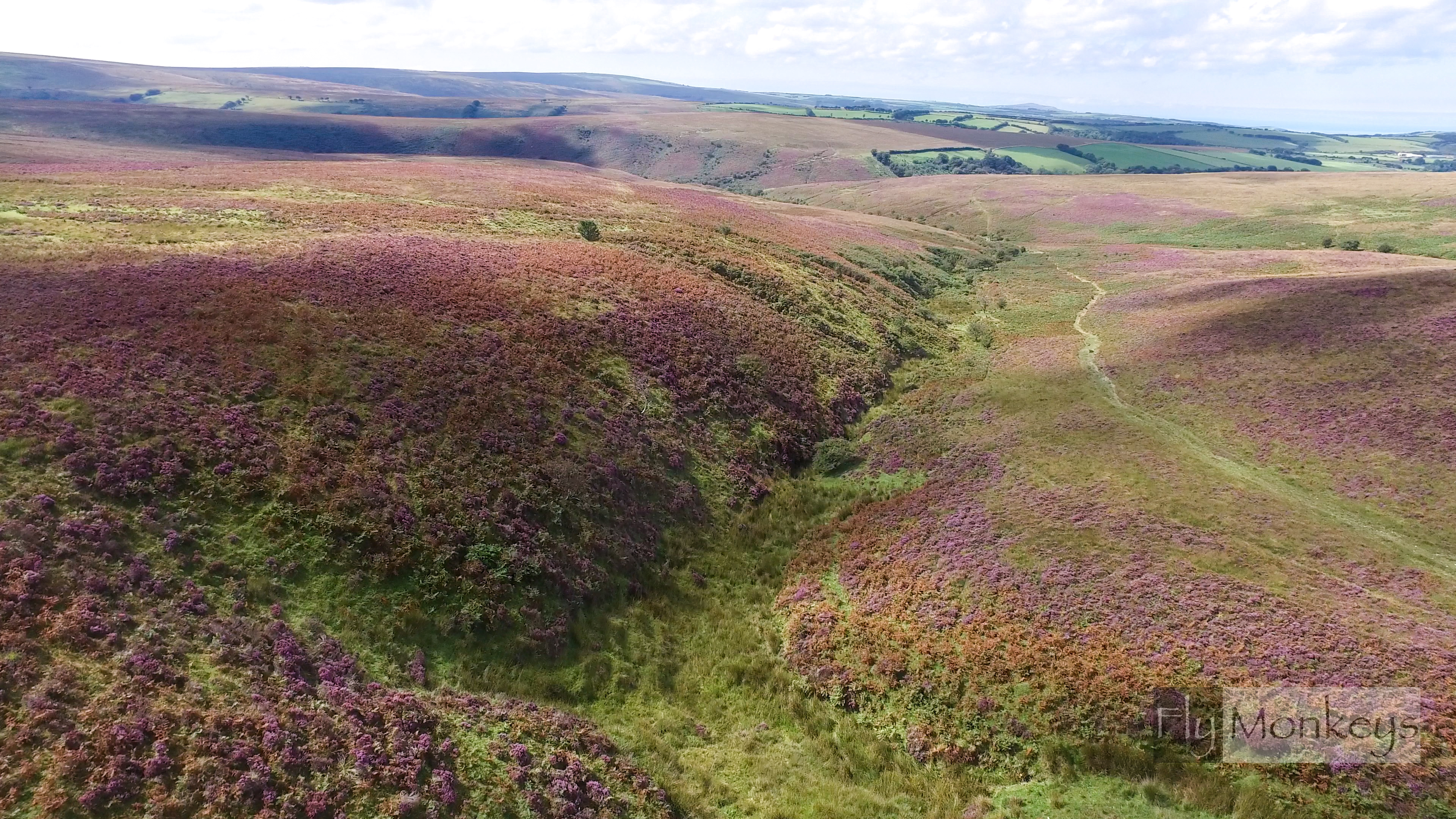 Exmoor heather 1