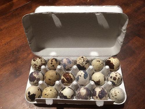 Carton of 18 Fresh Quail Eggs