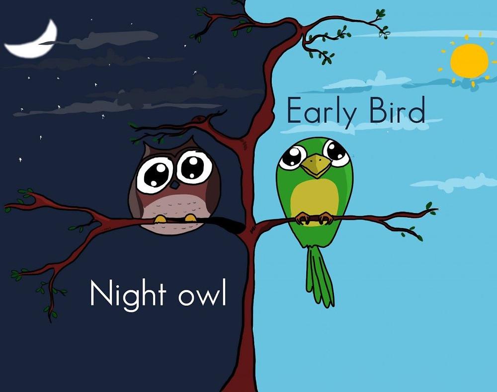 owl,bird,morning,night,moon,stars,sun,tree,leaves,clouds