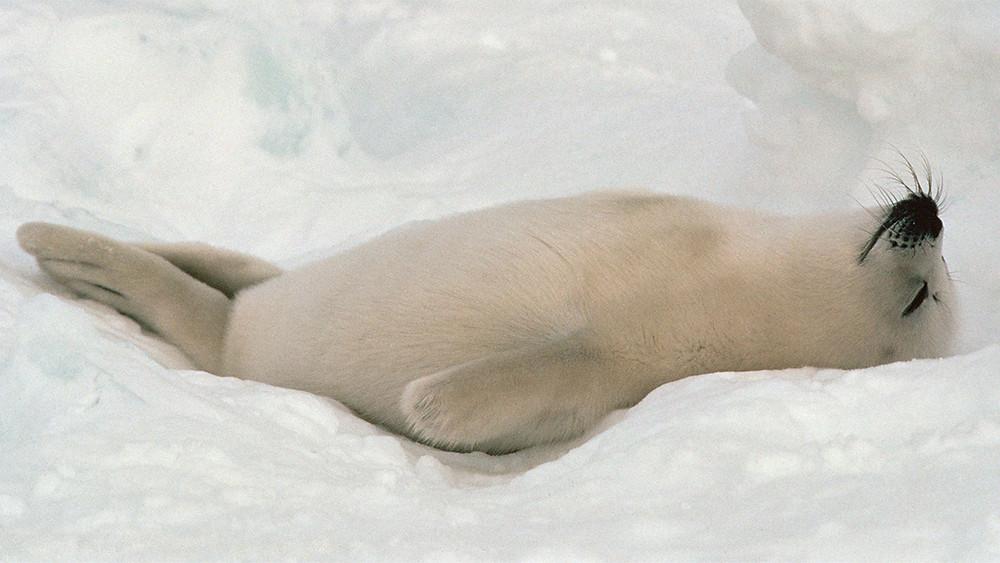 ploar.snow,sleep