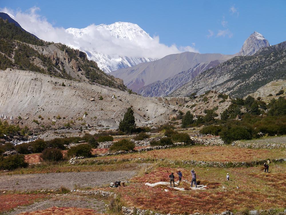 Manang village, 3,500 m, Nepal