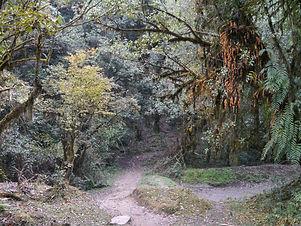 forest camp4.jpg