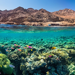 Dahab Above and Under water