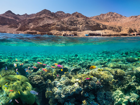 Dahab, Beauty Above and Under Water