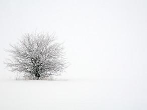 Chasing Winter Landscapes