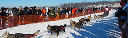 willow for Iditarod restart.png