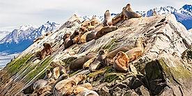 Ushuaia_Sea_Lions_Rock.jpg