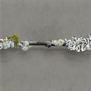 DEF 1 dessin lichen 2020 part 1 copie.jp