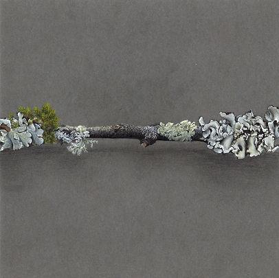 1 dessin lichen 2020 part 1.jpg