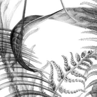 Ferns Tile2.2 insta.jpg