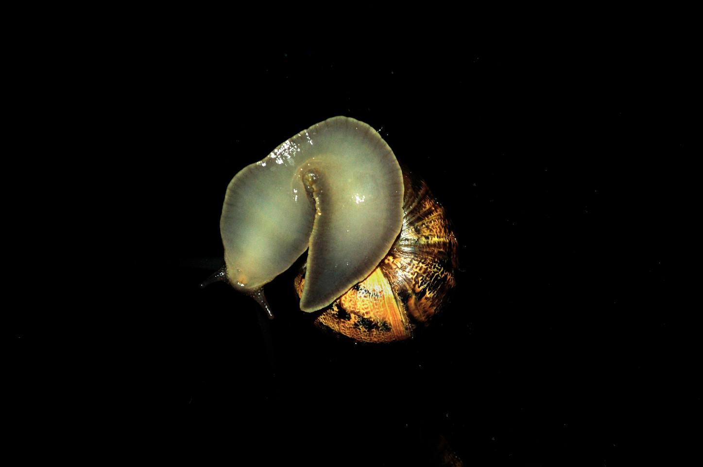 snail escargot nuit photography art