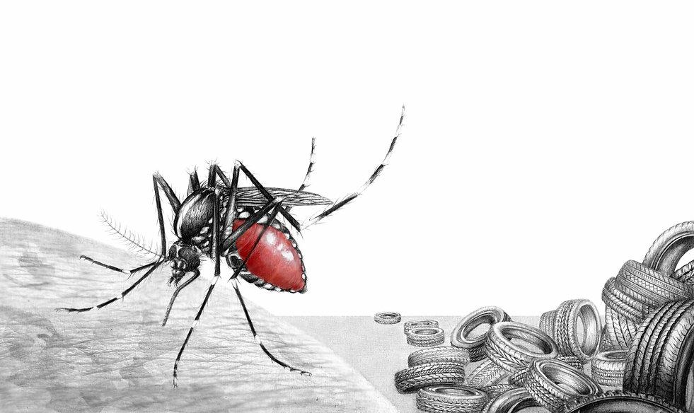 illustration_Mosquitoes_management_-_Cam