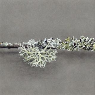 DEF 3 dessin lichen 2020 part 3 copie.jp