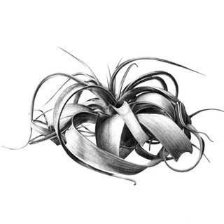Xerographica graphite COMP.jpg
