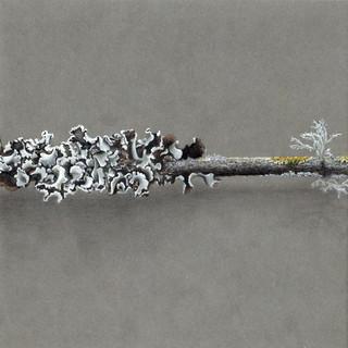 DEF 2 dessin lichen 2020 part 2 copie.jp
