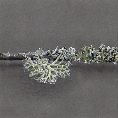3 dessin lichen 2020 part 3.jpg