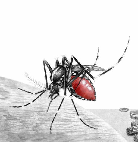 Mosquitoes Management