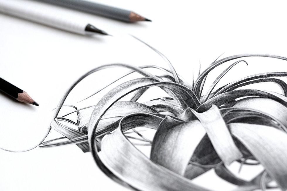 Camille Dessin graphite  Xerographica.jp