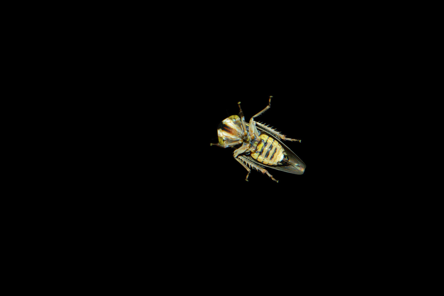 nuit insecte photography night darkness entomology art sciart