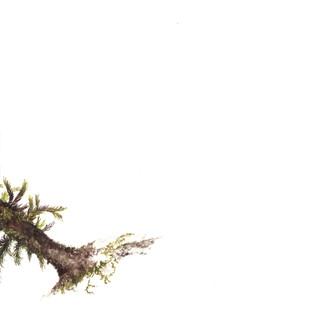 Tile 3 moss.jpg