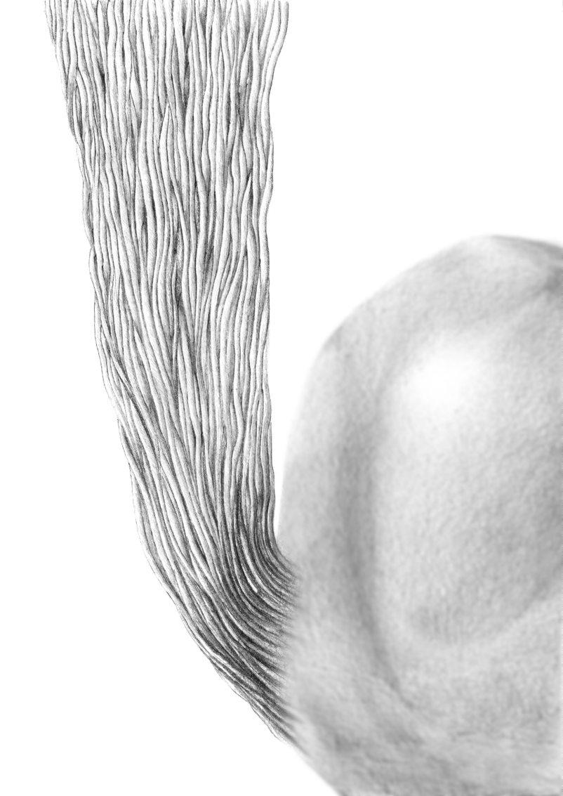 Figure tendon-bone attachment.JPG