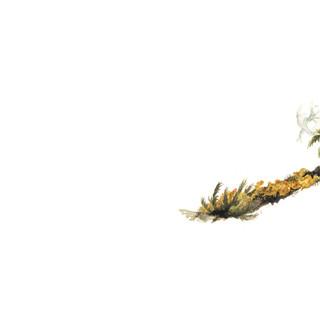 Tile 1 moss.jpg