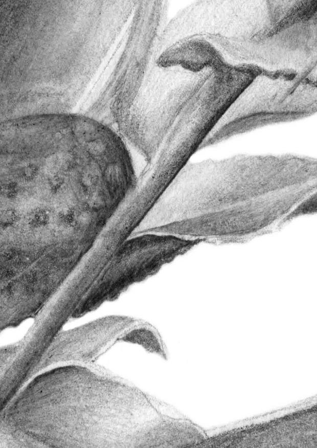 ferns, detail