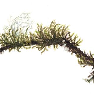 Tile 2 moss.jpg