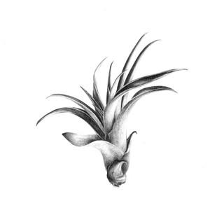 Xerographica_graphite_carré.jpeg